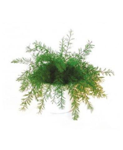 plante neptune